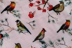 ptáčci na pudrové